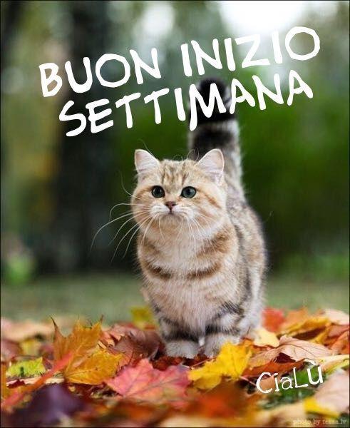 News Durante Sanremo Immagini lunedi