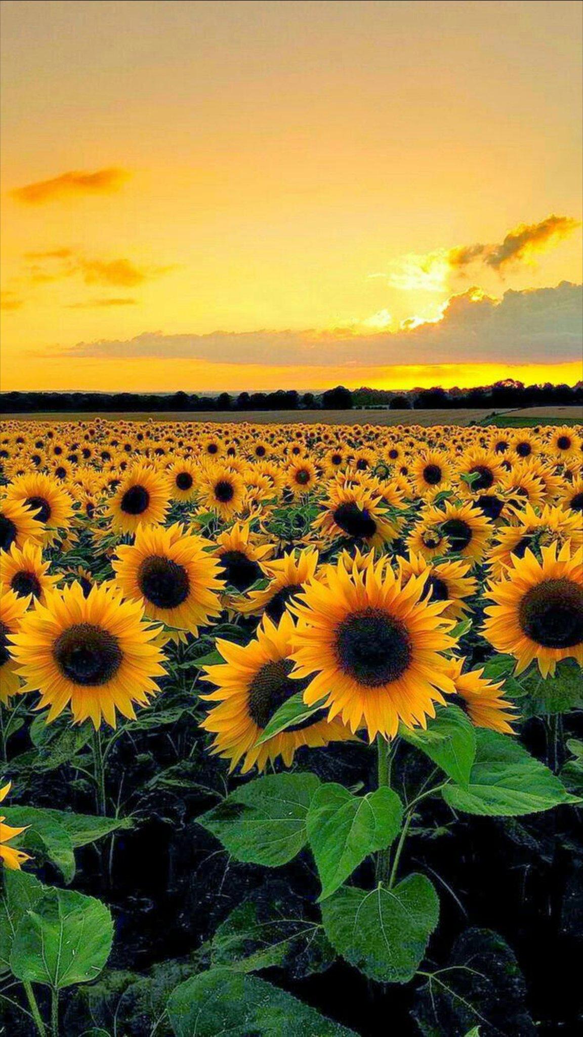 Buon Pomeriggio Immagini Belle Buona Serata Immagini