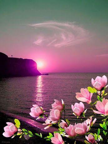 Buon Pomeriggio Immagini Buona Serata Immagini