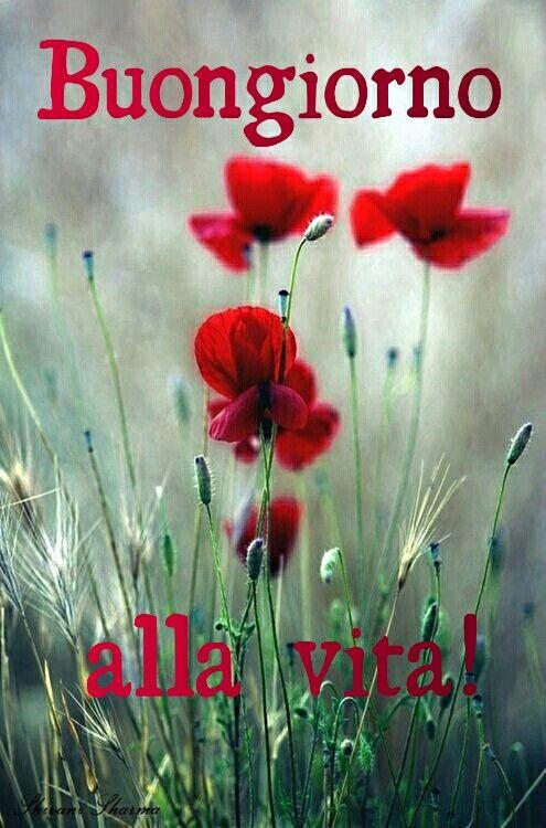 Cartoline Buongiorno Romantiche Immagini