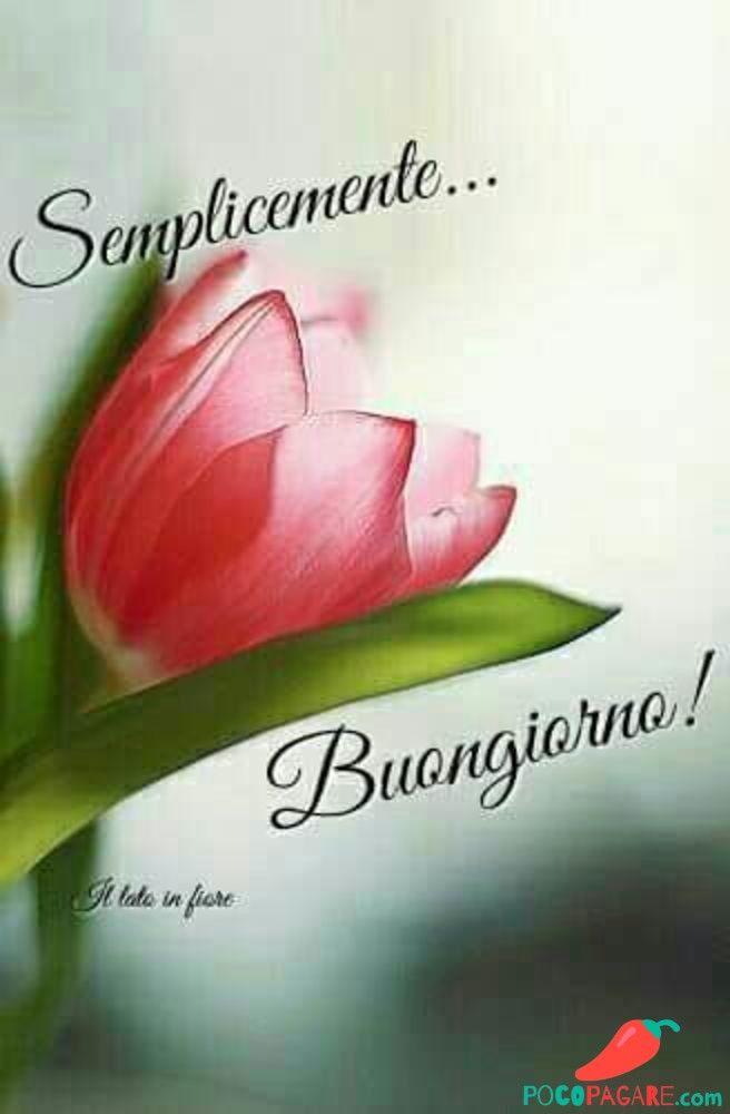 Cartoline Divertenti Del Buongiorno Immagini