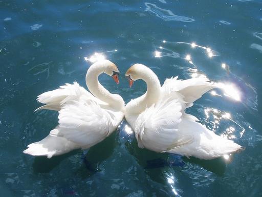 Cuori Foto Romantiche Del Buongiorno