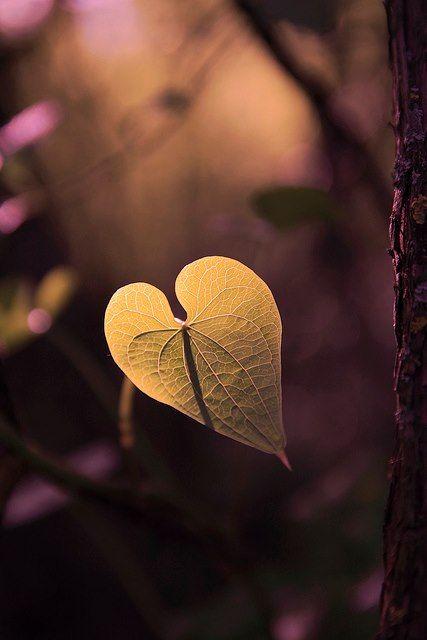 Cuori Immagini Innamorati Con Frasi
