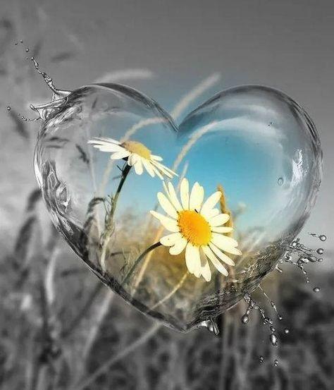 Cuori Immagini Romantiche Del Buongiorno