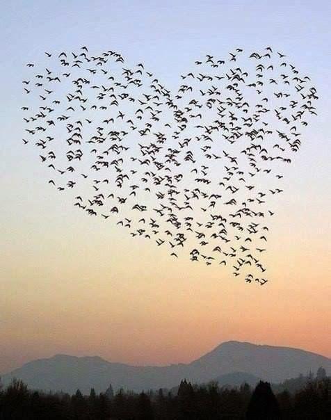 Cuori Immagini Romantiche Per Innamorati