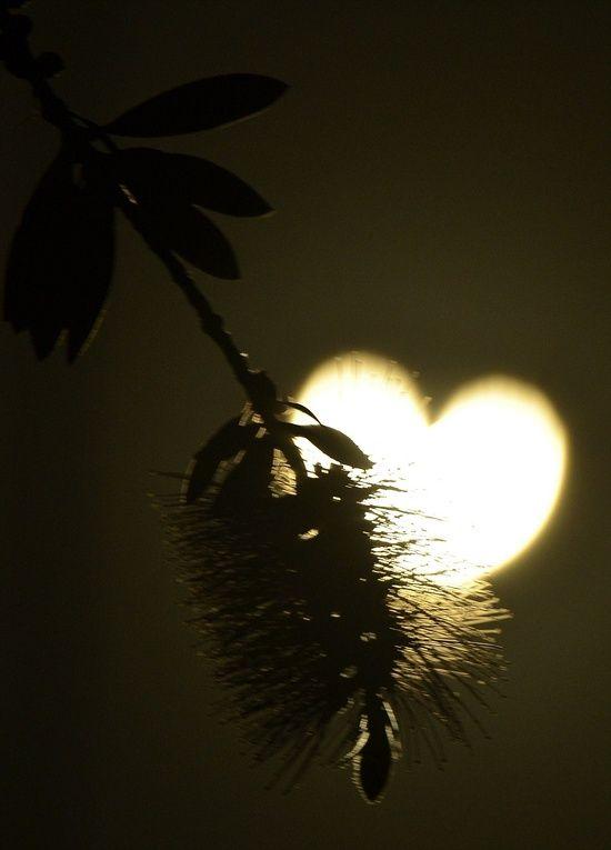 Cuori Immagini Stilizzate Amore