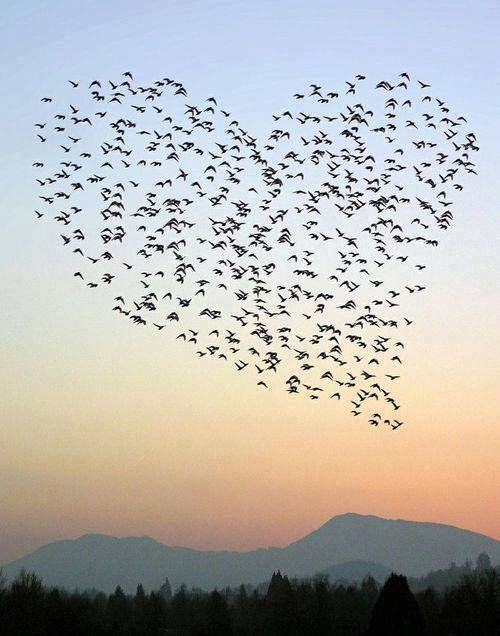 Cuori Vero Amore Immagini