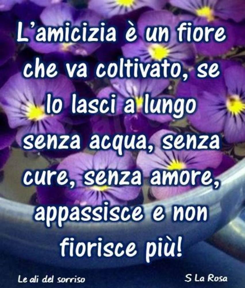 Fanpage Frasi Fratellanza Fratellanza Immagini