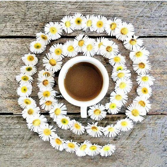 Macchina Caffè Cialde Lavazza Immagini
