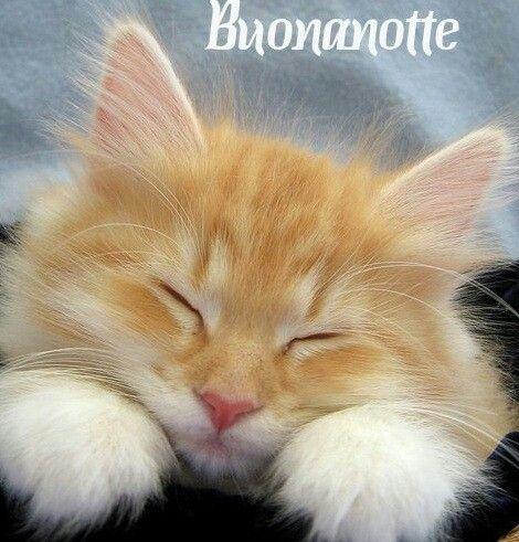 Saluti Buonanotte Buonanotte Immagini