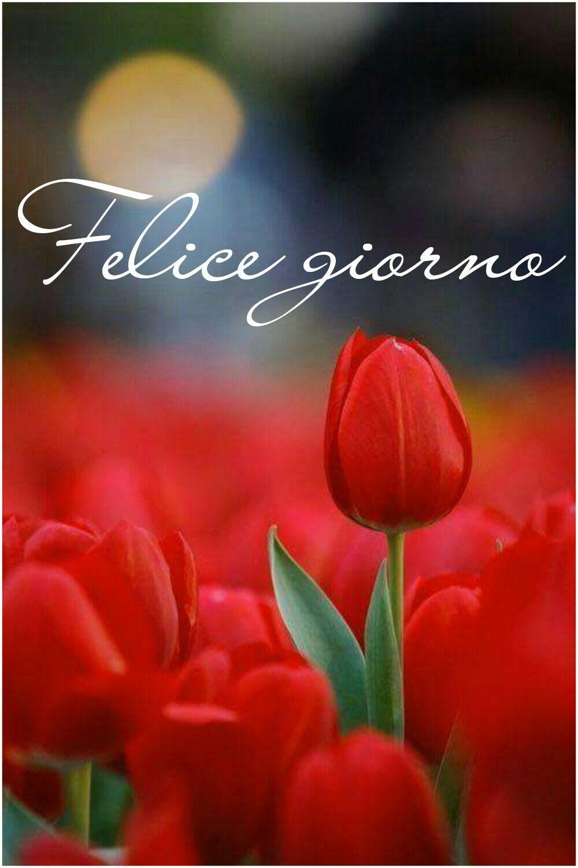 Sms Buongiorno Amore Mio Buona Giornata Immagini